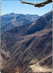 Arequipa and Colca Canyon