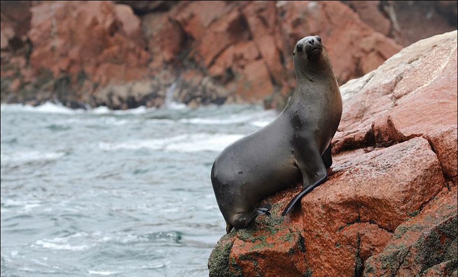 palomino island sea lions